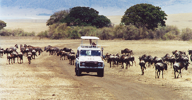 world adventures: Safari in Kenya, África world adventures Top 10 amazing world adventures FIRST PHOTO Wildebeest and Zebra on the Serengeti2