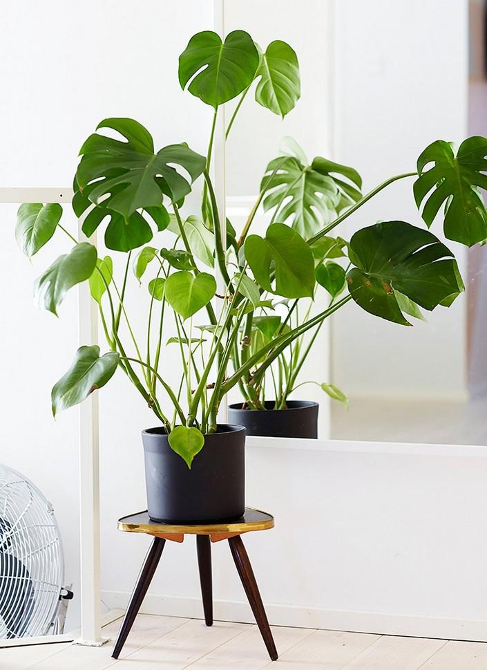 Home decor Ideas: Use tropical leaves Home decor Ideas Home decor Ideas: Use tropical leaves Home decor Ideas Use tropical leaves 1