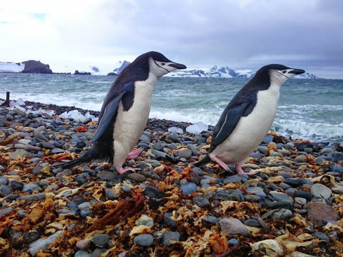 Visiting All the Countries Visiting All the Countries Meet the Youngest Person Visiting All the Countries In The World according to garfors penguins in their real environment are a must see they are incredible swimmers and posers