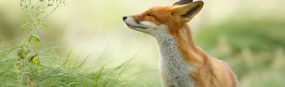 These photos of Wild Foxes enjoying their time will make your day