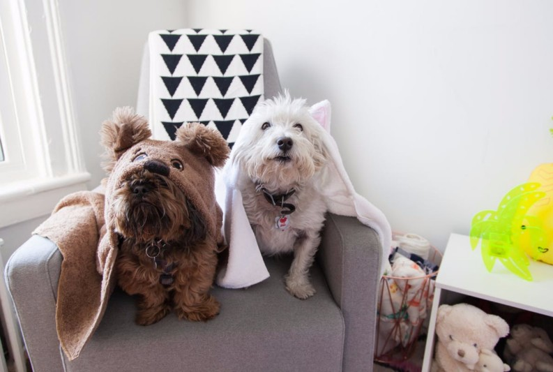 15 Amazing Interior Design Styles Every Dog Lover Must-See 10 Amazing Interior Design Styles Every Dog Lover Must-See 10 Amazing Interior Design Styles Every Dog Lover Must-See 5a9c6d3f6f6d8b8565ff0017a82283ef1446463b