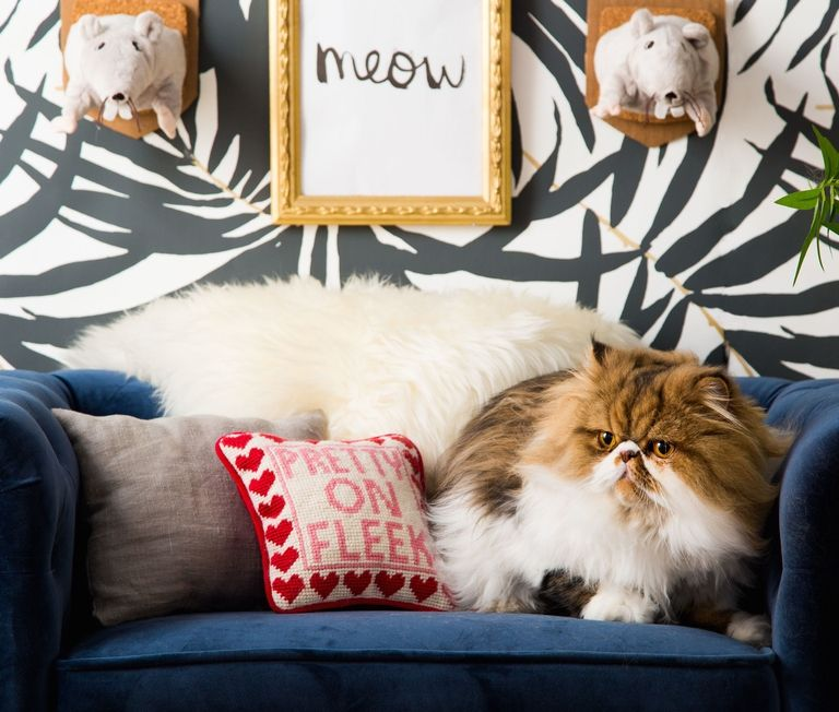 Tour this Feline Room Modern interior design modern interior design Tour this Feline Room Modern interior design and celebrate Cat's Day! gallery 1477683158 national cat day