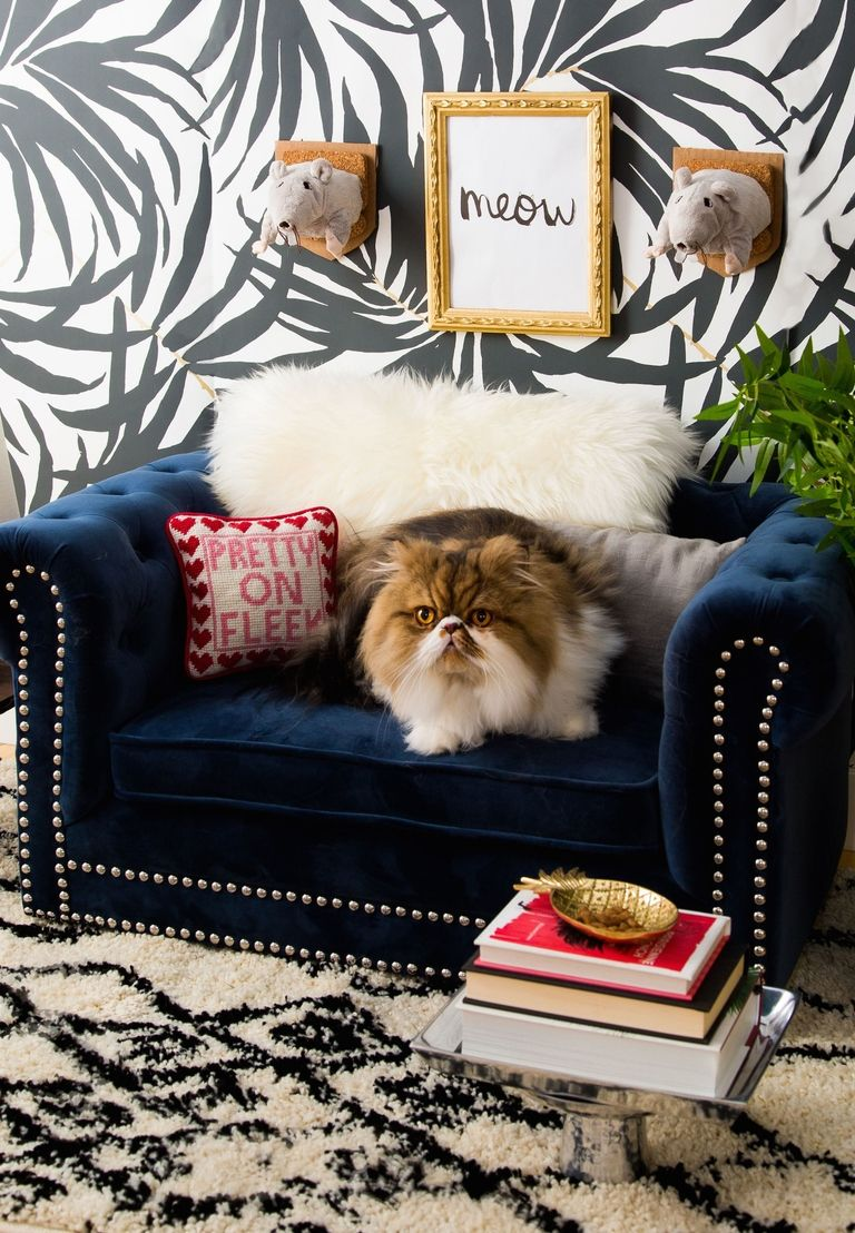 Tour this Feline Room Modern interior design modern interior design Tour this Feline Room Modern interior design and celebrate Cat's Day! gallery 1477683268 national cat day 4