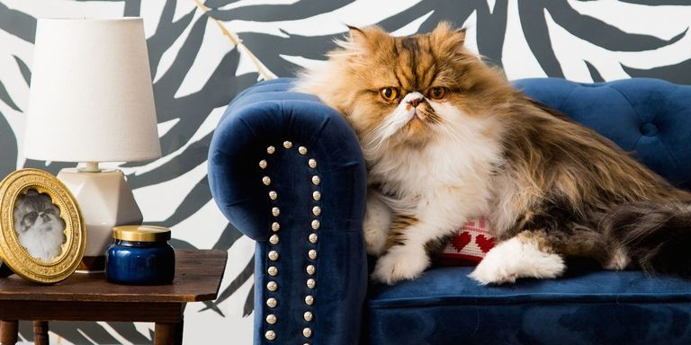 Tour this Feline Room Modern interior design and celebrate Cat's Day!