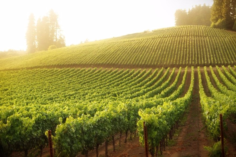 Top 10 Things To Do This Year  Best Travel Destinations Top 10 Things To Do This Year In the Best Travel Destinations sonoma 1499380633